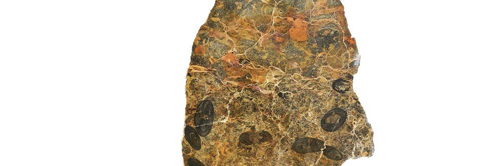 Oncolite Girvanella sp. (algal balls) stromatolite like
