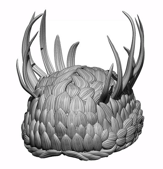 wiwaxia corrugata 3D modello paleontologico fauna del Burgess Shale