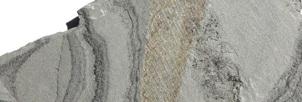Chancelloria fossil sponge marjum formation Utah usa