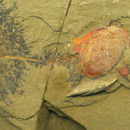 """"""" Fezouata Formation; systematic excavation in the Lower Ordovician Lagerstätte"""" Nuove cam"""