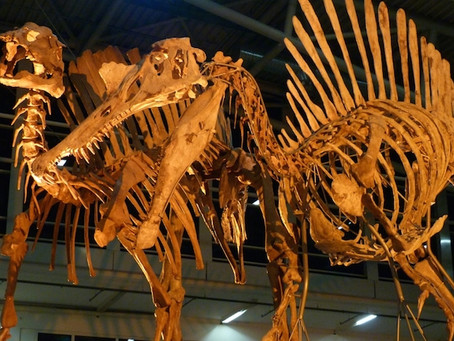 The Munich Fossil Show  2014 TDI at STAND A5-565