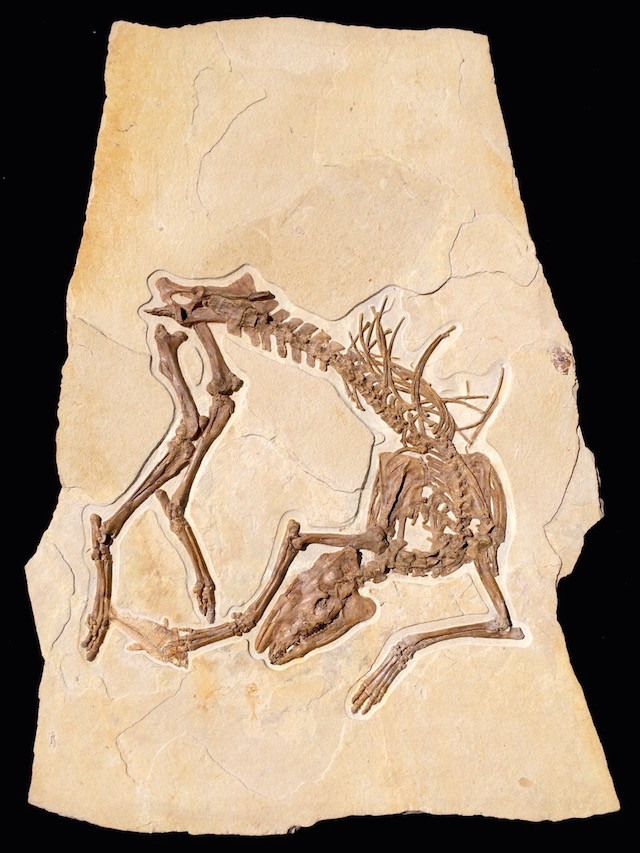 wyoming fossil horse evolution