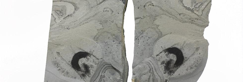 Rare Eldonia cf ludwigi Cambrian soft bodies