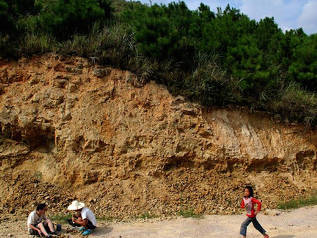 Dawan Formation 大湾 Yichuan  Hubei  China