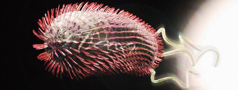 3D Bacteria Poster (Escherichia coli)