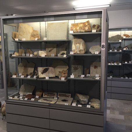 Man turns love for fossils into a beautiful private fossils Museum ita-eng
