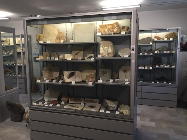 fossil show case 2