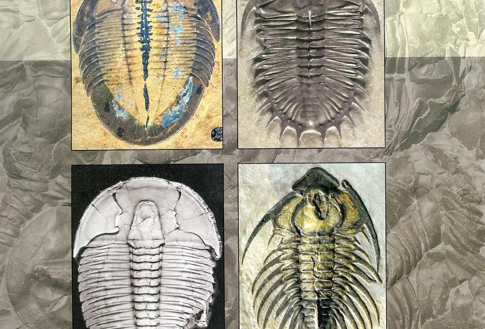 Exceptional Cambrian Fossils from Utah