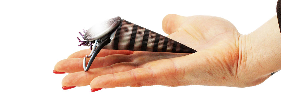 3D model Hyolith Haplophrentis Burgess shale