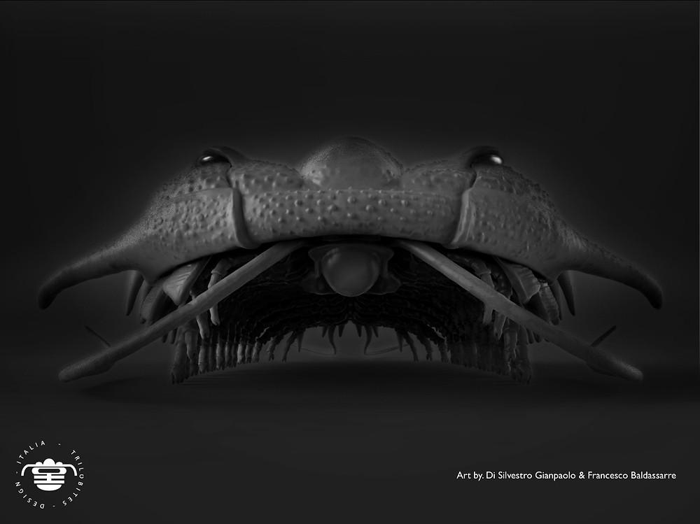 #3D Damesella paronai trilobite