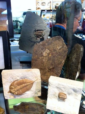 Sainte marie fossil trilobite 2015
