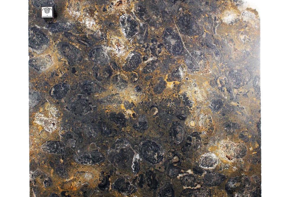 Cambrian Oncolite sp. algal ball stromatolite like