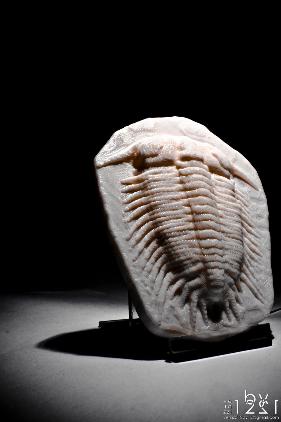 Damesella paronai trilobite 3D printing