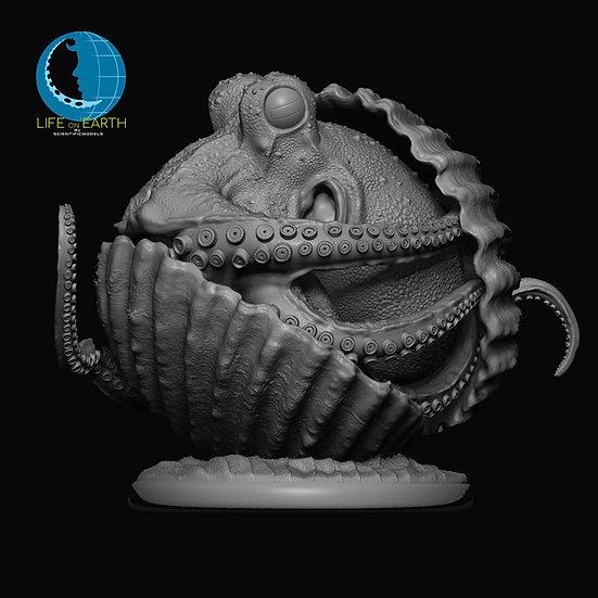 Modellino in resina di Polpo marino Coconut Octopus modellismo modelli resina scala 1.1