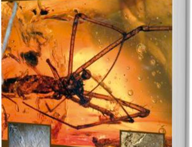 Fossil Spiders : The Evolutionary History of a Mega-diverse Order