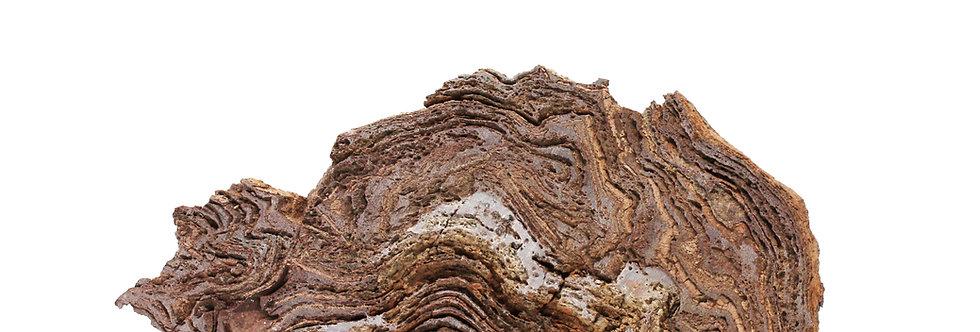 Moroccan Precambrian stromatolite Conophyton amantourartensis (Raaben, 1980)