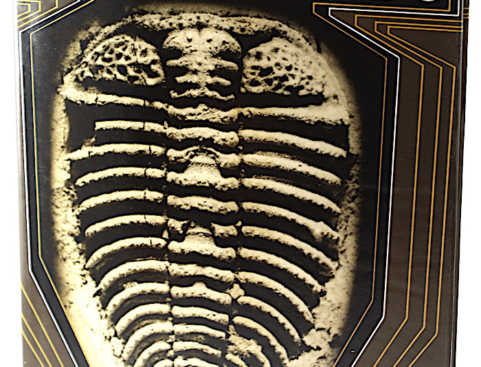 Bohemian Trilobites