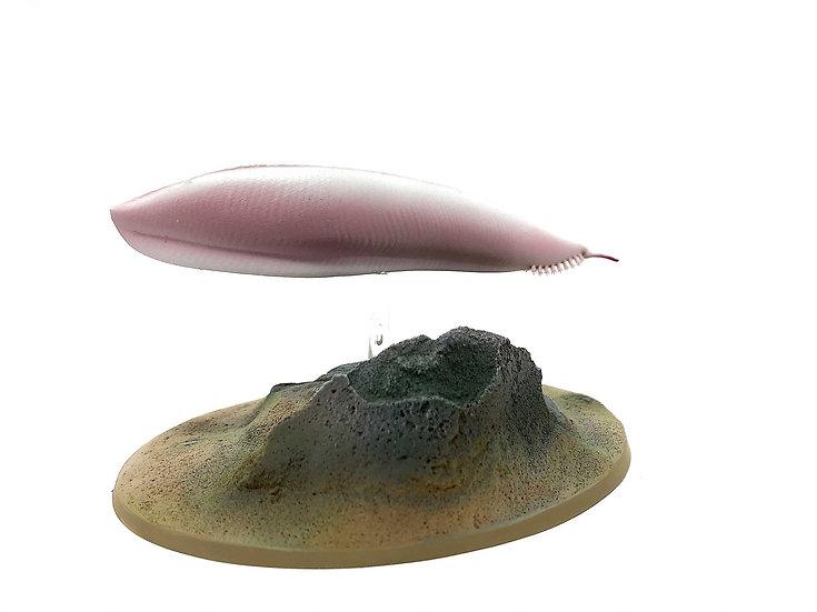 Pikaia gracilens modello resina organismo cambriano