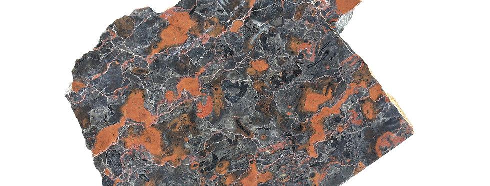 Rare Oncolite Girvanella sp. (algal balls) lower cambrian stromatolite like