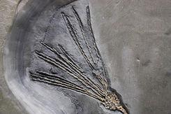 Gogia-spiralis-4.jpg