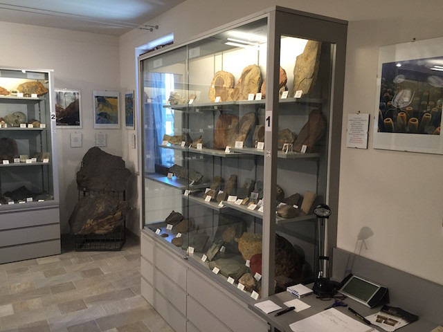 fossil show case 1