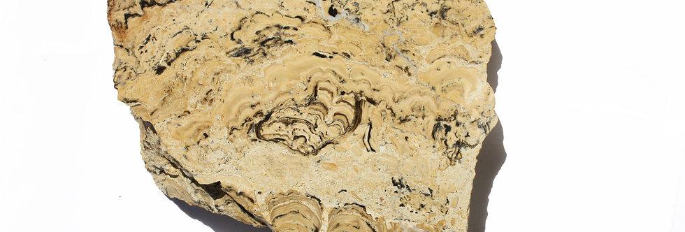 Miocene Stromatolite