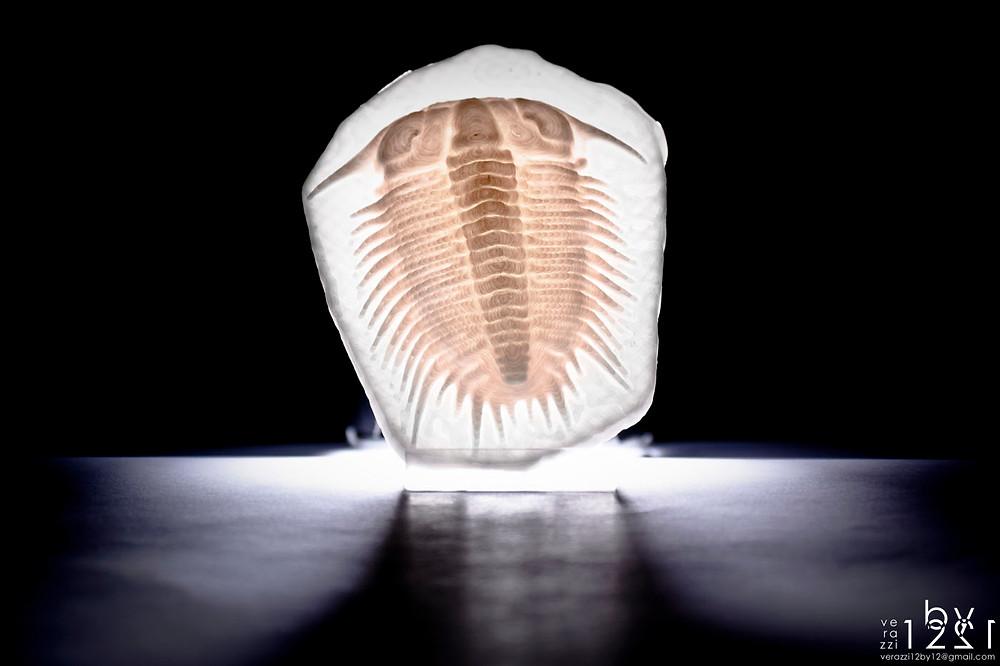 Damesella paronai trilobite 3D printing 4
