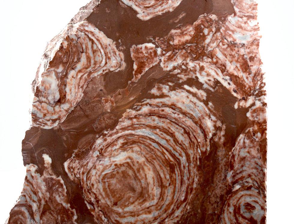 Chinese Stromatolite