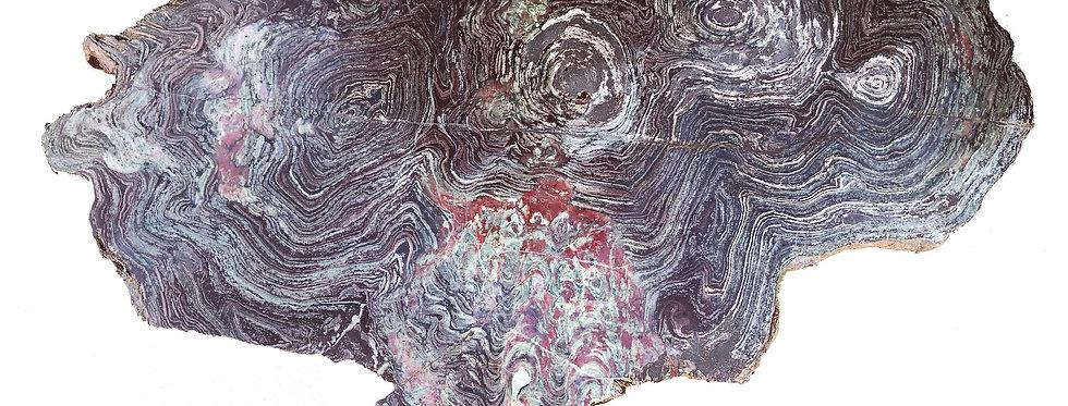 Real Precambrian stromatolite Conophyton amantourartensis (Raaben, 1980)