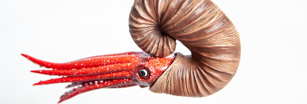 Scaphites planus 3D model ammonite Cretaceous