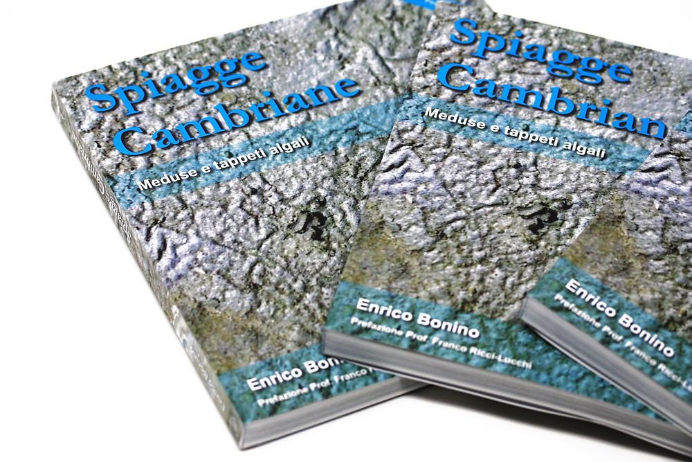Spiagge cambriane volume libro di Enrico Bonino