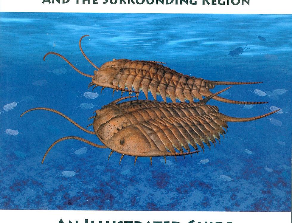 Ordovician Trilobites of Southern Ontario