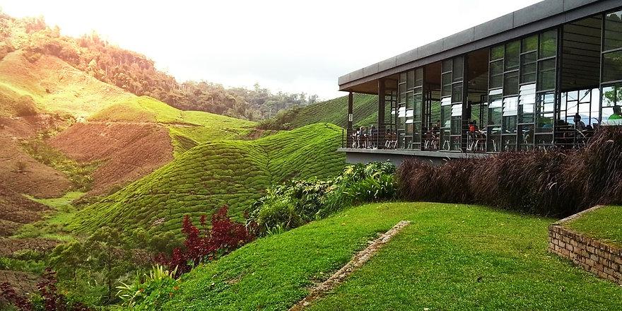 boh-tea-plantations_malaysia-tour.my_.jp