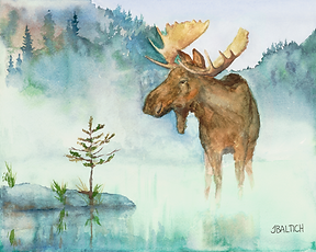 Moose in the Mist.  A foggy Minnesota morning in the Boundary Waters