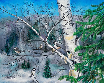 The chickadees all hang out in birch trees at winter in Northern Minnesota