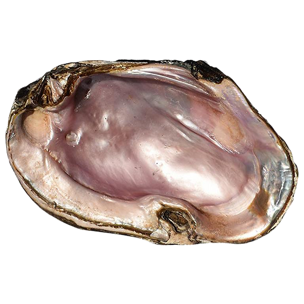 pearl shell.png