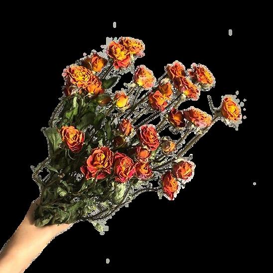 Orange Dried Roses flower,Dried flower b