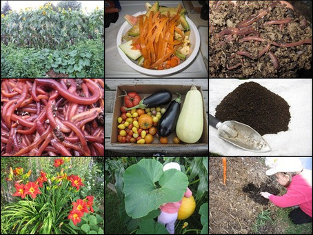 Вермикомпост для сада – повышаем урожайность