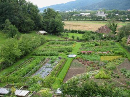 Натуральное земледелие: от прошлого к настоящему