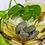 Thumbnail: Pyrite