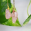 Thumbnail: Rose Quartz Necklace