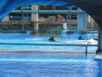 Updates from SeaWorld Orlando