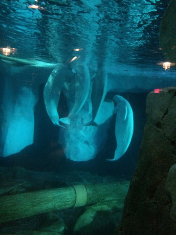 SeaWorld's Nanuq Likely Suffered For Weeks Prior to Death