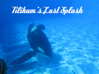 Tilikum's Last Splash - A Tribute