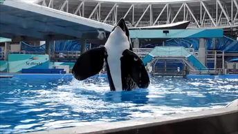 New Class-Action Lawsuit Filed Against SeaWorld
