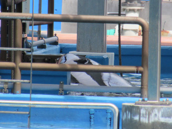 Tilikum appears to be improving 3.20.16
