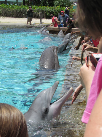 SeaWorld's New Gimmick at Dolphin Cove