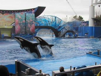 Update on Malia at SeaWorld Orlando