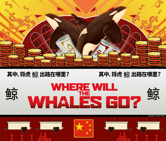 Where Will the Whales Go?