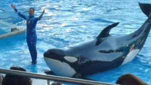 Is It Time for SeaWorld To Move Away From the Whale Business?